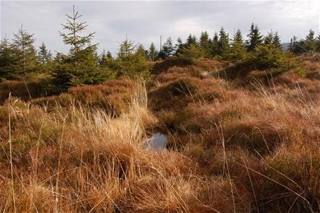 Ostrůvky bezlesí jsou ideálním biotopem pro ohroženého tetřívka obecného.