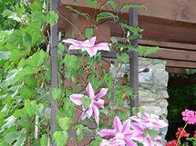 Zahradní posezení s pergolou a udírnou
