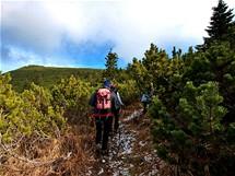 Pod vrcholem. Chodník prochází vysokou klečí