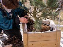 Stromky v kontejnerech je potřeba opatřit dalším obalem, abyste mezeru mezi nimi mohli vyplnit polystyrénem a listím