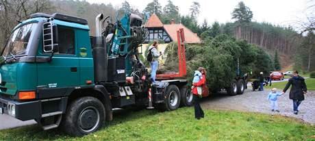 Vánoční strom pro brněnské náměstí Svobody se stěhoval z Bílovic nad Svitavou. (16. listopad 2010)