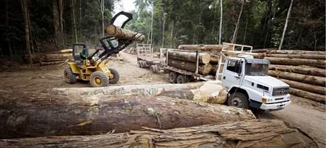 Těžba dřeva v severní části brazilské Amazonie.