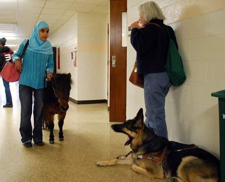 Vodící klisnička ponyho Cali se skamarádila s vodícím psem Harperem