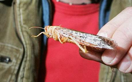 Na Gastrofestu můžete ochutnat i osmažený hmyz.