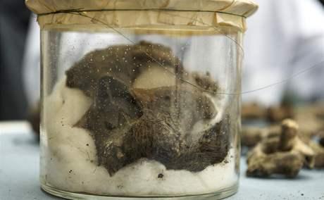 Mezinárodní tým vědců zveřejnil fotografie ostatků Tycha Braha. Na snímku obličejová část lebky s knírem