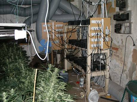Zátah na nelegální pěstírnu marihuany v Příběnicích na Lounsku.