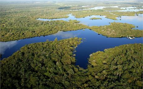 Brazilský deštný prales.