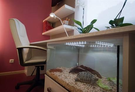 Želvák Felix se na novém místě ihned pustil do salátu