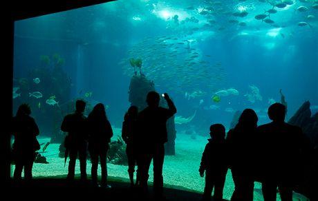Lisabon. Lisabonské Oceanárium je největší v Evropě