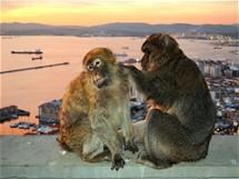 Makakové nad zálivem vGibraltaru