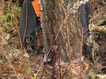 Zásek proveďte v pravém úhlu ke směru pádu stromu
