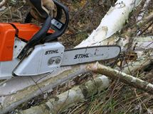Při odvětvování sledujte napnutí větve a začněte ji odřezávat na tlakové straně