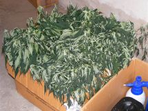 Snímek z domovních prohlídek u pěstitelů marihuany.