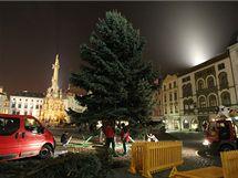 Letošním vánočním stromem je v Olomouci patnáctimetrový stříbrný smrk, který komise vybrala v místní části Nemilany.