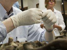 Mezinárodní tým vědců zveřejnil fotografie ostatků Tycha Braha