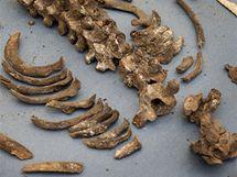 Mezinárodní tým vědců zveřejnil fotografie ostatků Tycha Braha. Na snímku sestavená kostra