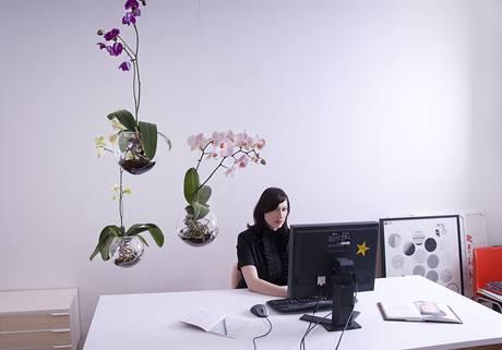 """další výhoda """"Létajících orchidejí""""? Nemusíte se příliš starat o zalévání."""
