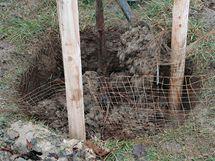 Pak přikryjte kořeny hlínou, jemně je protřepávejte, aby se hlína dostala až dolů pod kořeny