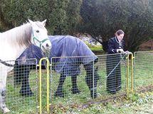 Vzpomínkové akce na bitvu Tří císařů začaly v Náměšti na Hané, kam si účastíci přivezli koně Fabiana (černý) a Czaka. (27. listopad 2010)