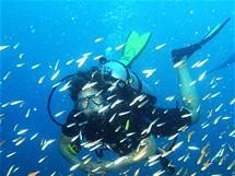 Podmořský život kolem ostrova Koh Lipe na jihu Thajska