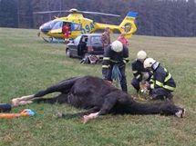 Záchranáři museli vyprostit ženu, kterou u Náchoda zalehl kůň