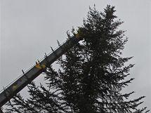 Vztyčování vánočního stromu na Pernštýnském náměstí v Pardubicích