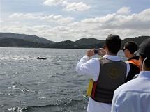 Pozorování delfínů u Setúbalu