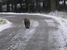 Uprchlý makak se procházel po silnici mezi Baldou a Stašovem.