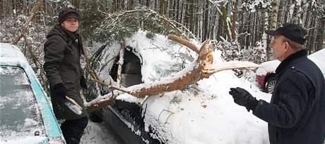 V Tachovské ulici v Plzni na Lochotíně spadl strom na zaparkovaná auta