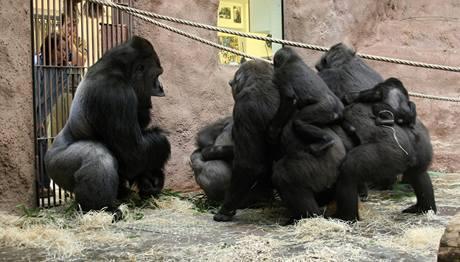 V jedné chvíli měly ostatní samice Bikiru doslova na lopatkách