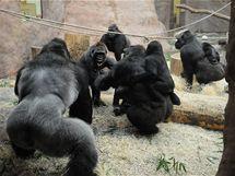Samice neváhaly na Bikiru útočit i s mláďaty na zádech