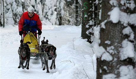 U Třech Studní na Žďársku trénovali v sobotu majitelé psích spřežení (Slavomír Pavlík).