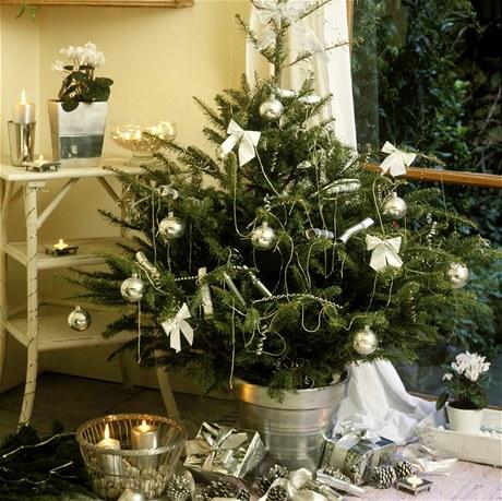 Vlastnímu jehličnanu můžete dopřát do Vánocích luxusní vzhled. Původní květináč