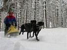 U Třech Studní na Žďársku trénovali v sobotu majitelé psích spřežení (Pavel Zvolský).