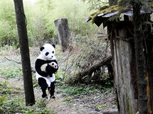 Pandí mládě na procházce