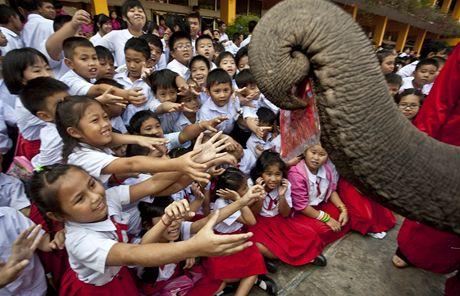 Thajské školáky obdarovali sloni v oblečcích Santa Clause (23. prosince 2010)
