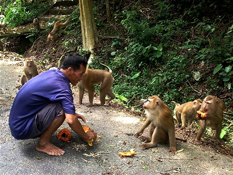 Thajsko, Phuket