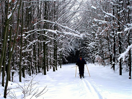 Milovníci běžkování projedou ve Voděradských bučinách trasy hned jak napadne první sníh