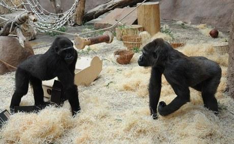 Bikira (vpravo) s Mojou v době, kdy ještě Moja měla potřebu ji provokovat