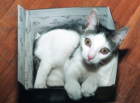 Kočky většinou krabice, košíky, tašky i další uzavřené prostory milují a většinou do nich ochotně vlezou i samy