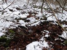 Boreč, místa bez sněhu prozrazují úniky teplého vzduchu