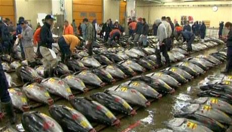 Dražba na rybím trhu v Tokiu