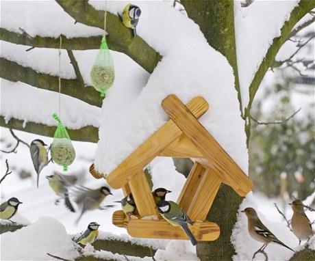 I přes nejednoznačné výsledky vědeckých studií ptactvu přikrmování během zimy svědčí