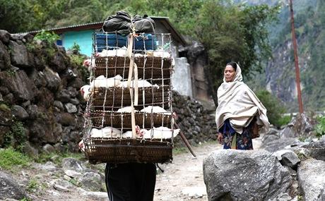Nepál. V horách se všechno nosí na zádech, třeba slepice na prodej