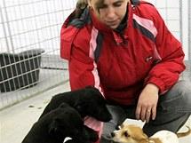 Pracovnice útulku Marcela Šťastná dává psím nalezencům pamlsky.