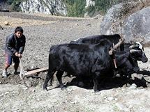 Nepál. Práce na kamenitých horských políčkách je dřina