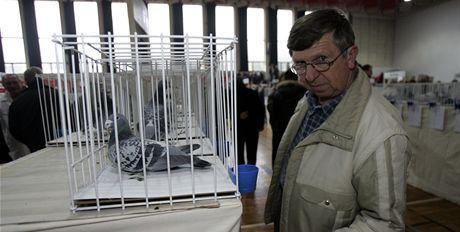 Celostátní výstava holubů ve sportovní hale v Hluku.