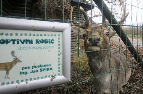 Daněk v zoo Ohrada.