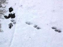 Stopy bobrů v lokalitě u Devíti mlýnů v Národním parku Podyjí.