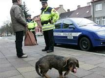 Městská policie kontroluje chovatele psů, zda dodržují vyhlášku a uklízí po svých psech.